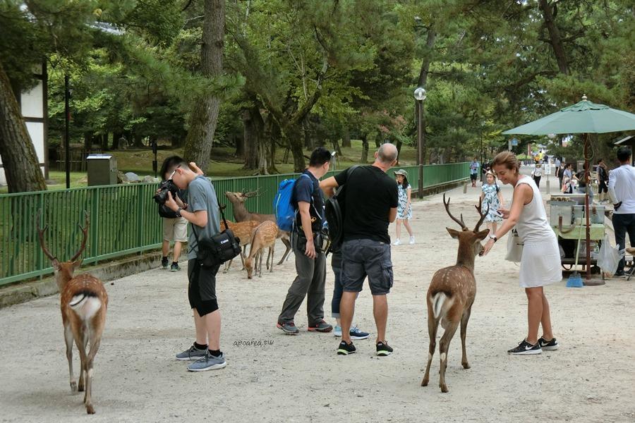 奈良公園|小鹿斑比在哪裡 群鹿搶食餵鹿驚魂記 荒池 猿沢池 奈良親子旅遊