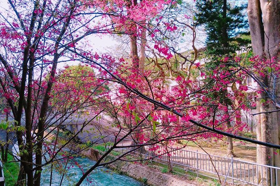 20180225115525 99 - 賞櫻免塞車 市區公園還有小橋流水也很美