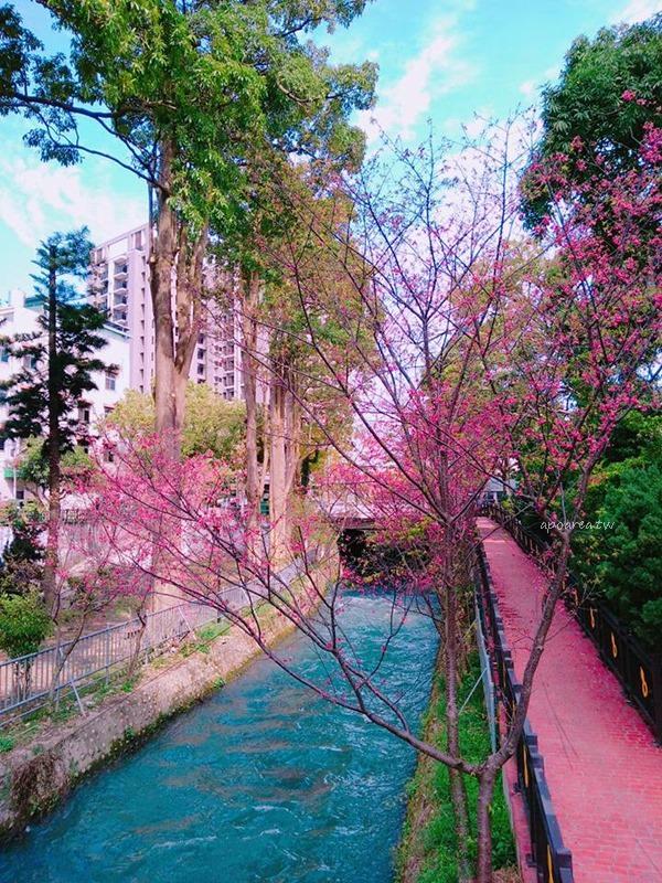 20180225115625 41 - 賞櫻免塞車 市區公園還有小橋流水也很美