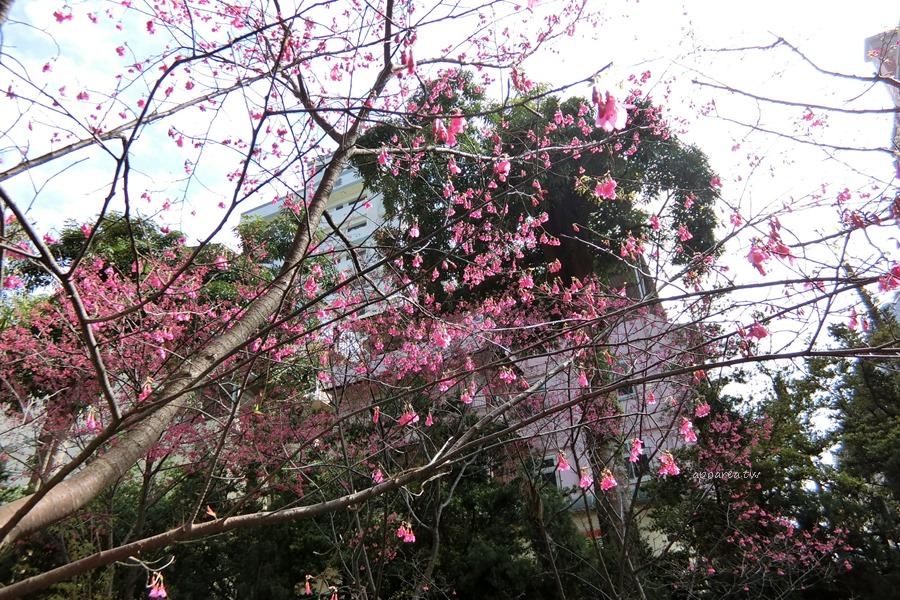 20180225142714 86 - 賞櫻免塞車 市區公園還有小橋流水也很美
