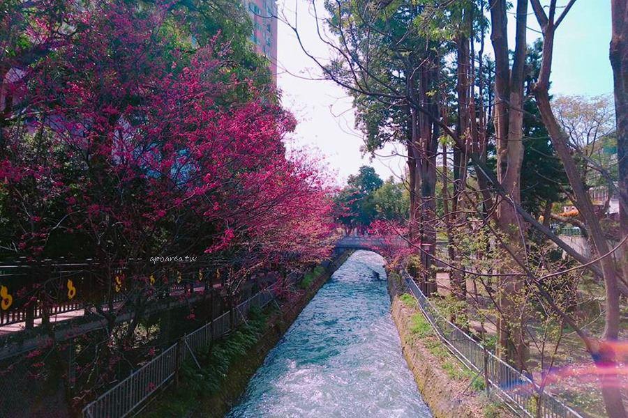 20180225142802 53 - 賞櫻免塞車 市區公園還有小橋流水也很美