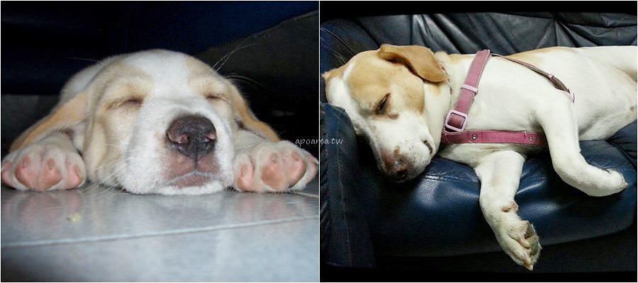 20190415101246 38 - 108年犬隻行為訓練免費課程開放報名 愛毛孩就一起來學習 認識人寵關係 終養不棄養 臺中市動物之家