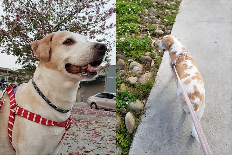 20190415105142 36 - 108年犬隻行為訓練免費課程開放報名 愛毛孩就一起來學習 認識人寵關係 終養不棄養 臺中市動物之家