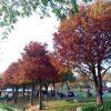 新都生態公園。北屯浪漫落羽松,綠地草皮景觀水池,近大坑風景區,台中親子免費景點